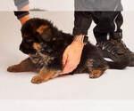 Small #23 German Shepherd Dog