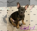 Image preview for Ad Listing. Nickname: Frenchie