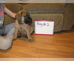 Small #8 Mastiff