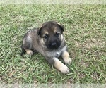 Small #20 German Shepherd Dog