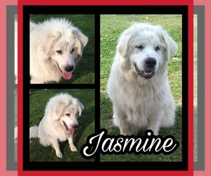 Mother of the Great Pyrenees puppies born on 12/28/2020