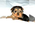 Image preview for Ad Listing. Nickname: Peighton