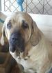 Fila Female 2 years old