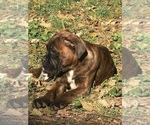 Small #5 Boxer