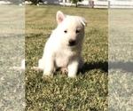 Small #21 German Shepherd Dog