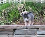 Puppy 4 Jug
