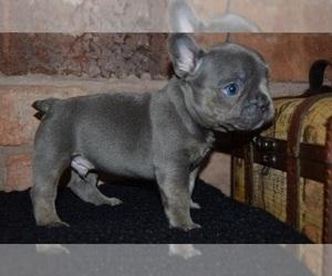 Puppies for Sale near El Paso, Texas, USA, Page 1 (10 per