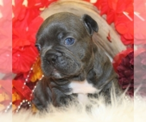 French Bulldog Puppy for sale in FARMER MARKET, CA, USA
