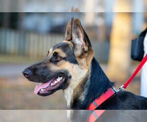 German Shepherd Dog Dog for Adoption in GROVETOWN, Georgia USA