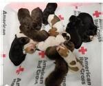 Small #157 Rottweiler Mix
