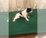 Small #6 Portuguese Water Dog