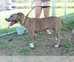 Small Photo #18 Mutt Puppy For Sale in Abbeville, LA, USA