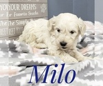 Image preview for Ad Listing. Nickname: Milo