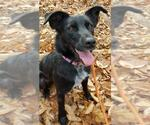 Small #1270 Border Collie Mix