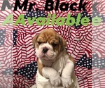 Image preview for Ad Listing. Nickname: Mr. Black