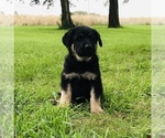 Small #50 German Shepherd Dog