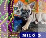 Image preview for Ad Listing. Nickname: MILO