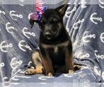 Small #2 German Shepherd Dog