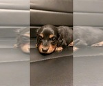 Image preview for Ad Listing. Nickname: Roscoe