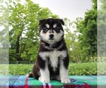 Image preview for Ad Listing. Nickname: Baxter
