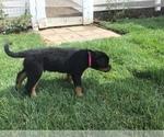 Small #25 Rottweiler