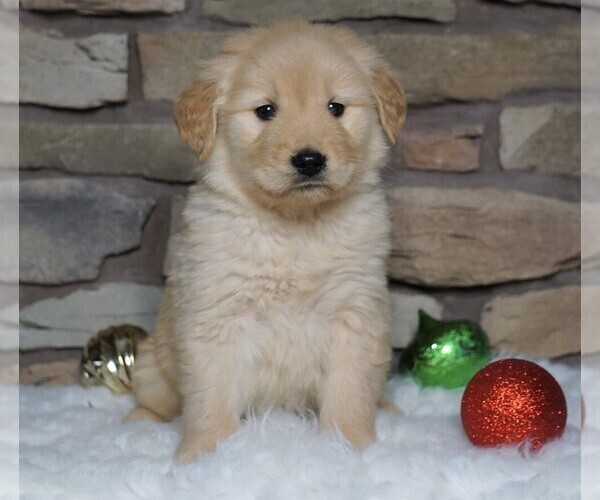 View Ad: Golden Retriever Puppy for Sale near In Greece
