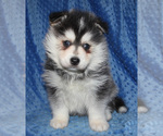 Image preview for Ad Listing. Nickname: Koda