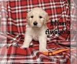 Image preview for Ad Listing. Nickname: Jalynn