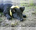 Small #134 Australian Shepherd