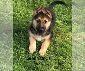 German Shepherd Dog Puppy for sale in STILLWATER, OK, USA