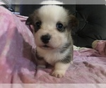 Image preview for Ad Listing. Nickname: Delilah AKC