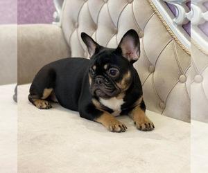 French Bulldog Puppy for Sale in BALDWIN HILLS, California USA