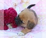 Small #5 Puggle
