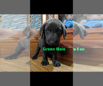 Small #13 Labrador Retriever