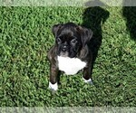 Small #9 Boxer