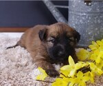 Small #4 Soft Coated Wheaten Terrier