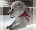 Small #35 German Shepherd Dog