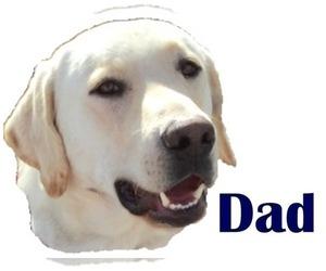 Father of the Labrador Retriever puppies born on 12/29/2020