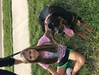 Doberman Pinscher Puppy For Sale in ALDIE, VA,