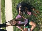 Doberman Pinscher Puppy For Sale in ALDIE, VA, USA