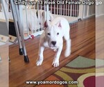 Small Photo #176 Dogo Argentino Puppy For Sale in PINEVILLE, MO, USA