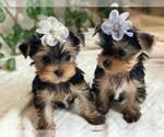 Small #3 Yorkshire Terrier