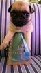 Pug Puppy For Sale in SUNMAN, IN, USA