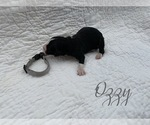 """Image preview for Ad Listing. Nickname: """"ozzy"""""""