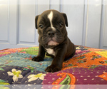 Small #13 Bulldog