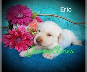 Labrador Retriever Dog for Adoption in ZEBULON, North Carolina USA