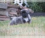 Puppy 2 Jug