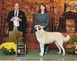 Anatolian Shepherd Puppy For Sale in NEW TAZEWELL, TN