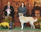 Anatolian Shepherd Puppy For Sale in NEW TAZEWELL, TN, USA