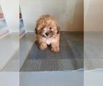 Puppy 2 Mal-Shi